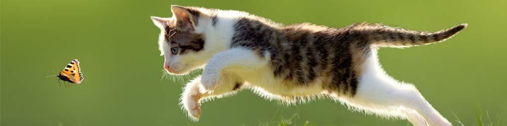 Kitten chasing butterfly